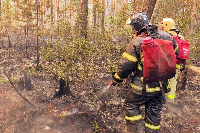 Тушение природного пожара вПетушинском районе— под личным контролем Губернатора